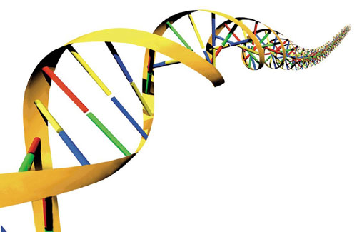 external image dna-500.jpg